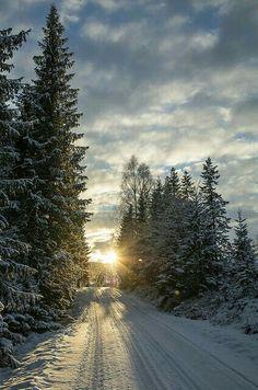 Winter morning sun.