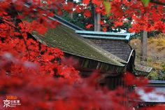 Hieizan Enryakuji in Autumn by Fraven Ang, via 500px
