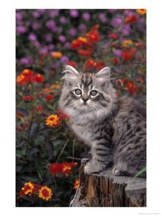 CHATS Kittens Cutest, Cats And Kittens, Cute Cats, Kitty Cats, Cuddling, Dog Cat, Cute Animals, Puppies, Pets