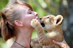 Lion cub kisses. Port Elizabeth, South Africa