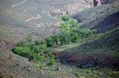 Grand Canyon National Park: Indian Garden 4369 by Grand Canyon NPS, via Flickr