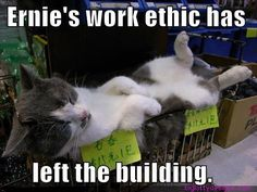 Ernie!  Wake up! http://sulia.com/channel/animals/f/44ae5596-7efb-4f0e-b799-249bc1ad83df/?source=pin&action=share&btn=small&form_factor=desktop&pinner=125749213