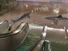 Tiburones en el Metro de NY