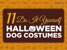 11 Creative DIY Dog Costumes You Can Make In Time For Halloween Infographic Epic Halloween Costumes, Diy Dog Costumes, Cute Costumes, Diy Halloween, Costume Ideas, Halloween Horror, Yorkie Names, Dog Cages, Animal Projects