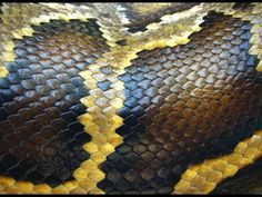 Dreams About Snakes - What do dreams about snakes mean?