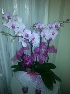 Bayram ciceklerimiz orkideler :)