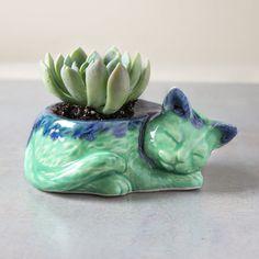 Plantador de Kitty, cerámica no maceta suculenta concreto, planta de aire, maceta azul menta verde, accesorio de decoración de escritorio de gato