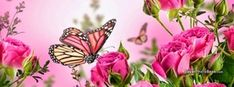 Butterfly Pink Flowers Spring, Free Facebook Timeline Profile Cover, Animals