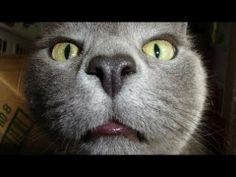 Funny Cats Video Ever Funny Cats Compilation 2014 Best Funny Cats video 2014 funny animals cats HD http://www.youtube.com/watch?v=E2N2rXBiG8w