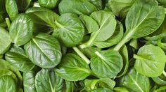 Spinach (Spinacia oleracea) Health Benefits | Brett Elliott's Ultimate Herbal Detox