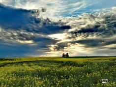 FIELD IN THE SUNSET by benictures on 500px