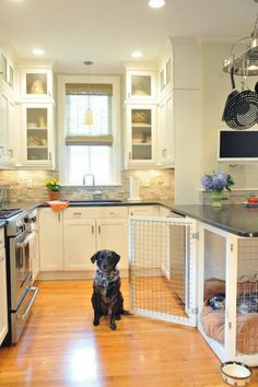http://www.apartmenttherapy.com/15-pictures-of-homes-that-are-probably-on-your-pets-pinterest-board-223281?crlt.pid=camp.Dca3hODk6Fz3