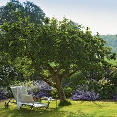 Solitude places in garden  Under tree
