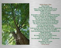 advice from a tree | Sage advice from a tree | Julette Millien