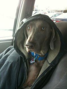 FOX45 Dayton's Dog of the Day - Chase