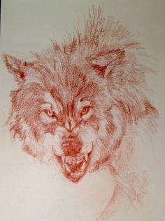 Lobo a sanguina