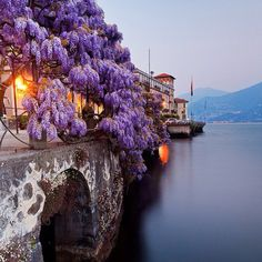 ❤ 🍝 ❤ Bella Italia ❤ Wisteria flower sets of this beautiful picture off Lake Como, Italy ❤ 🍝 ❤ Bella Italia ❤ Lake Como is a lake of glacial origin in Lombardy, Italy ❤ 🍝 ❤ Bella Italia ❤ Dream Vacations, Vacation Spots, Vacation Travel, Italy Vacation, Vacation Places, Summer Travel, Lac Como, The Places Youll Go, Places To See