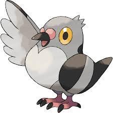 Resultado de imagem para pokemon tipo voador