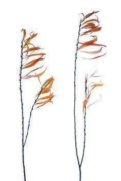 willow | STILL (mary jo hoffman)