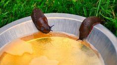 Он насыпал кофе в пепельницу и поджег… Наконец-то в саду можно спокойно отдыхать!   болезни и вредители