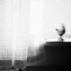 Chicken Window | Kate Donaldson