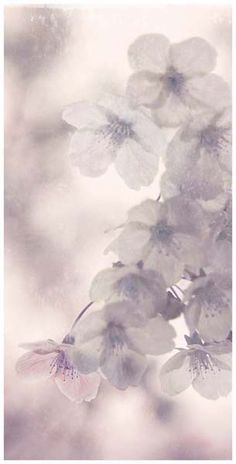 "Flowers in Neutral Moment-2015 ""Cherry blossoms"" Archival pigment print Printed on cotton rag fine art paper Photo by Soichi Oshika"