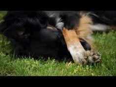 """Comment apprendre le tour """"cache-toi"""" à son chien ? La réponse en vidéo - Eduquer son chien - Wamiz"""