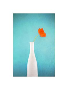 Poppy Still ----    This photograph is printed on Hahnemuhle german etching archival premium fine art paper using Epson ultrachrome archival