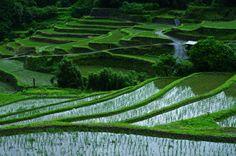 Idyll Spelled terraced rice fields in Fukuoka Prefecture Ukiha Shinkawa district. Green contrast is spread.