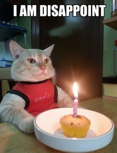 """Create meme """"funny pics with cats happy birthday, pictures birthday cat funny, happy birthday cat photo"""" Funny Cat Fails, Funny Cats And Dogs, Funny Animal Memes, Funny Cat Videos, Funny Cat Pictures, Cats And Kittens, Funny Animals, Kitten Videos, Funny Memes"""