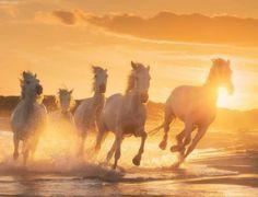 Camargue angels by Daniel Kordan Beautiful Creatures, Animals Beautiful, Animal Movement, White Horses, Photography Workshops, Horse Art, Landscape Photographers, Animal Photography, Cool Photos