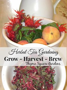 TSG: Herbal Tea Gardening