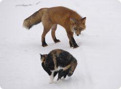 Ryska cat and fox