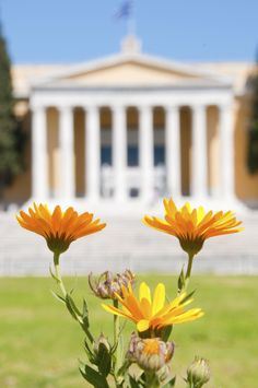 Flowers in the garden of Zappeion, Athens, Greece