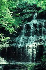Short Springs Natural Area near Tullahoma, TN. I love hiking here. It is a short circle trail with this FANTASTIC waterfall at about the half-way point. Plan to wade in the creek and play in the water.