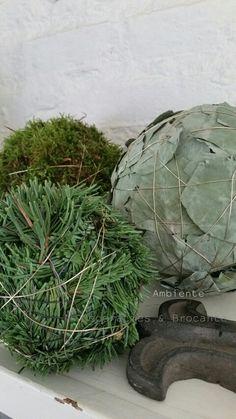 Ballen van mos eucalyptus en nobilis