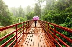 Remembering a walk in the Khao Yai National park on a summer day with light rain  #danishadventurer #travelblogger