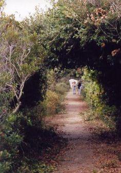Pea Island National Wildlife Refuge: Tunnel of Biting Flies :-p