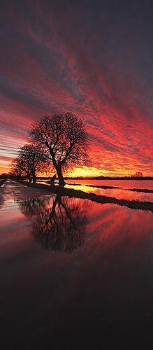 Flooded Sunrise