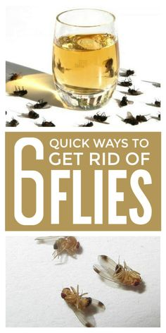 Get rid of flies indoors in the house and garage and outdoors on the patio and in the garden with these pest control home remedies, tips and fly traps using apple cider vinegar Home Remedies For Flies, Fly Remedies, Herbal Remedies, Natural Remedies, Keep Flies Away, Get Rid Of Flies, How To Repel Flies, Flys In The House, How To Catch Flies