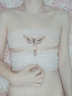 Pale body.