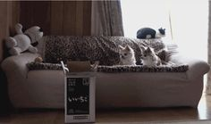 Take a look at our 7 best cat gifs of the week, they're brilliant !