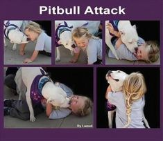 There used to be a time in America when Pitt bulls were known as 'The Nanny Dog'. If you had children, you wanted a Pitt bull to play with them, and watch over them. If only people understood this breed!