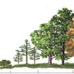 Bij het starten van een permacultuur-tuin: het Pareto-principe hanteren door te mulchen en randen te ontwerpen.