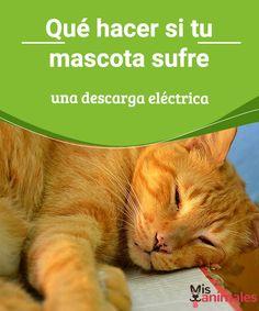 Qué hacer si tu mascota sufre una descarga eléctrica ¿Tu mascota sufrió una descarga eléctrica?. En este artículo encuentras toda la información para saber qué hacer en esos casos y cómo prevenirlo. #casos #gatos #información #consejos