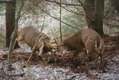 These hunting strategies will put you in the heat of the action when bucks are rutting hard.