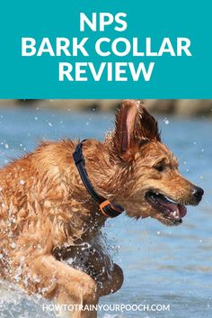 The NPS is a newly designed shock collar which comes with some of the most advanced settings you'll find on the market. It's suitable for all dog sizes and is one of the most effective anti-bark collars. Here's our review of the NPS Bark Collar. #barkcollar #dogbarking #puppybarking #stopbarkingproducts #stopdogbarking Bark Collars For Dogs, Cute Dog Collars, Anti Bark Collar, Best Dog Training, Training Tips, Dog Accesories, Dog Shock Collar, Stop Dog Barking, Dog Training Techniques