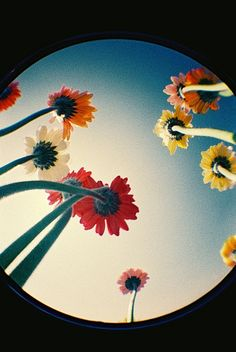 Fisheye colorful flowers
