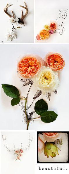 illustrations + fresh florals + photography  (cabbage roses- my favorite!)  [Keri Herer via Eat.Live.Shop]