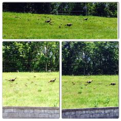 These fine feathered friends visited our Housing Solutions office today